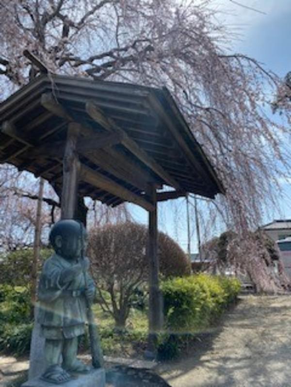 桜の季節サムネイル